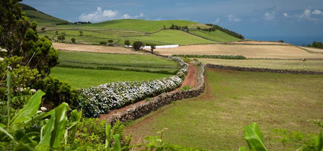 Azory Sao Jorge